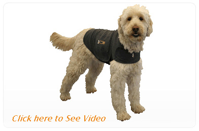 Thunder Shirt Video